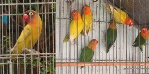 Попугаи в клетке