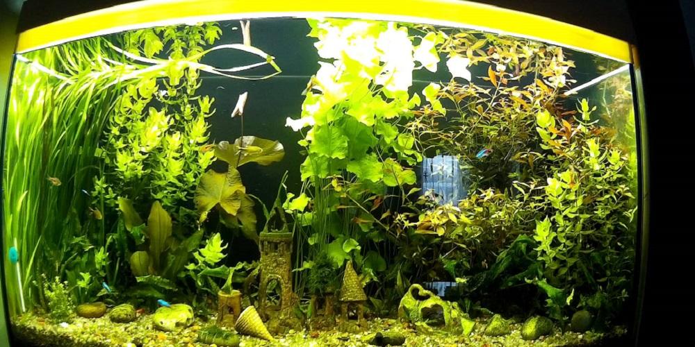 Домашний аквариум: