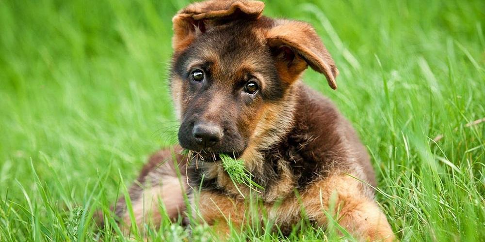 статьи про собак