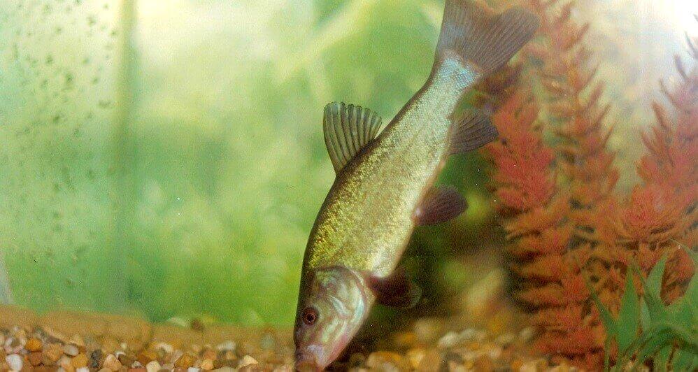 болезни рыбок лечение