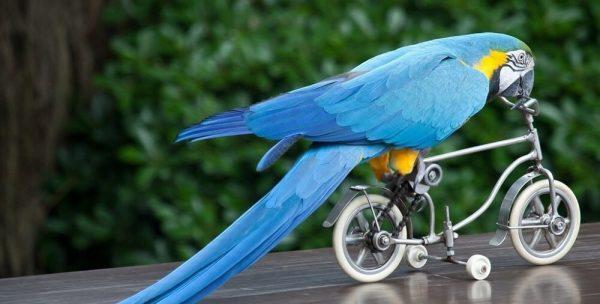 Занимательно о попугаях