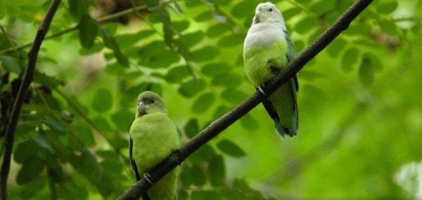 Интересный факт о птицах