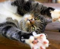 кошка когти