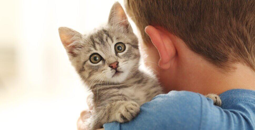 уход за кошками и котятами