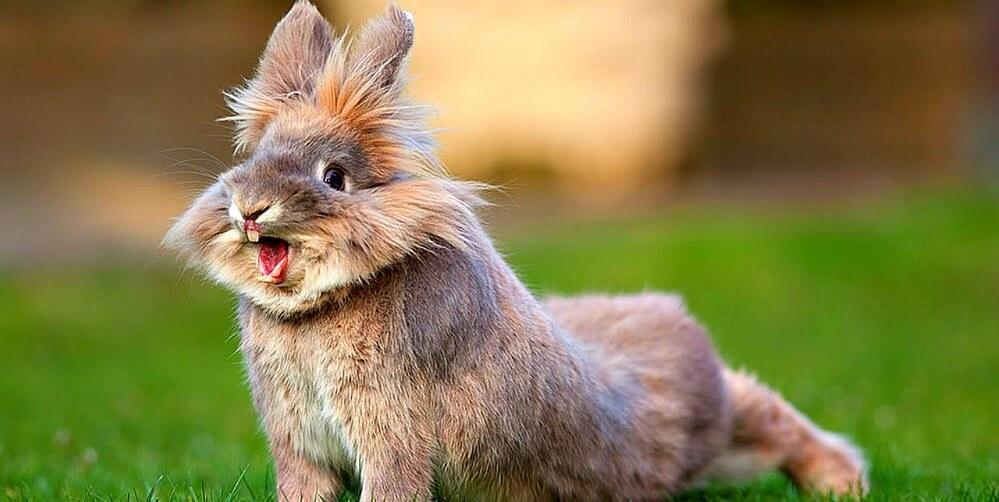 все про декоративных кроликов