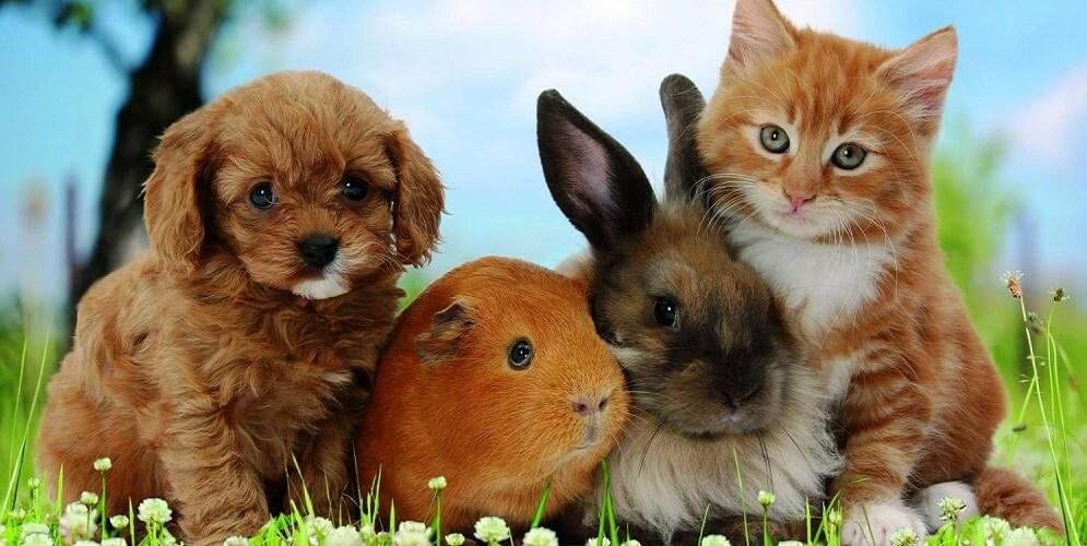 мир домашних животных