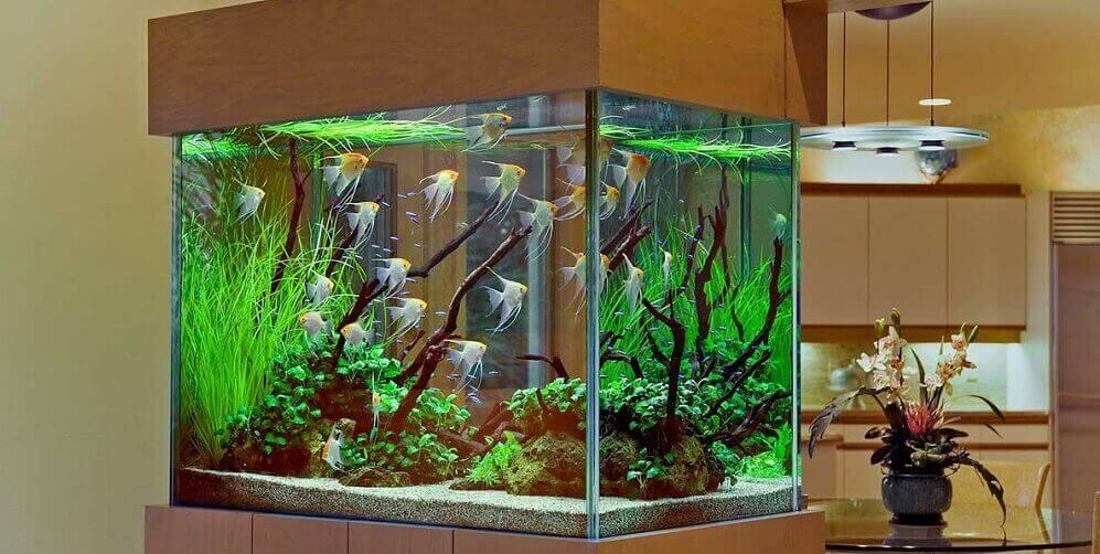 аквариум уход и содержание