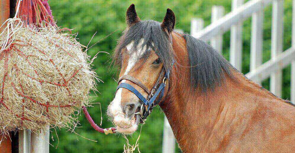 питание лошадей