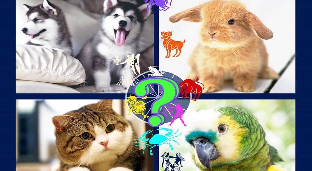 про домашних животных