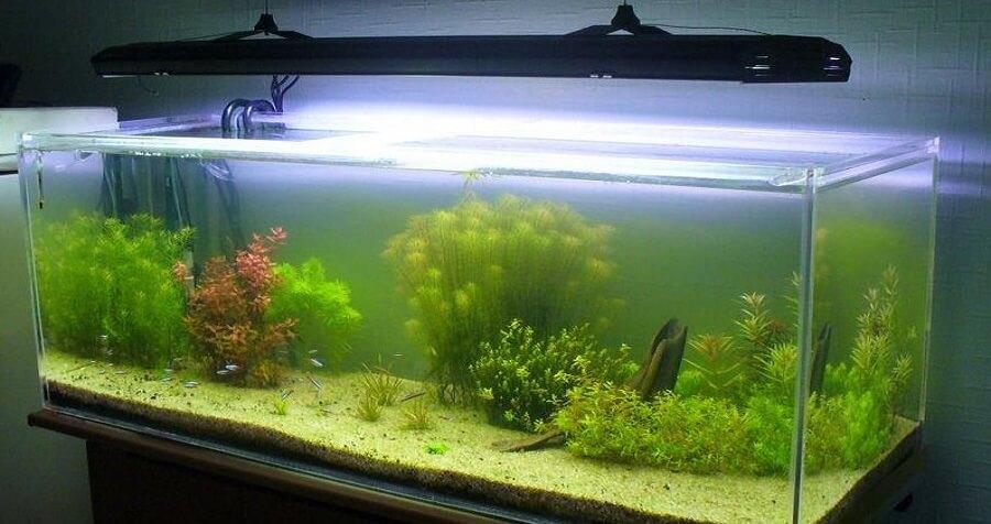 рыбки аквариумные фото и название