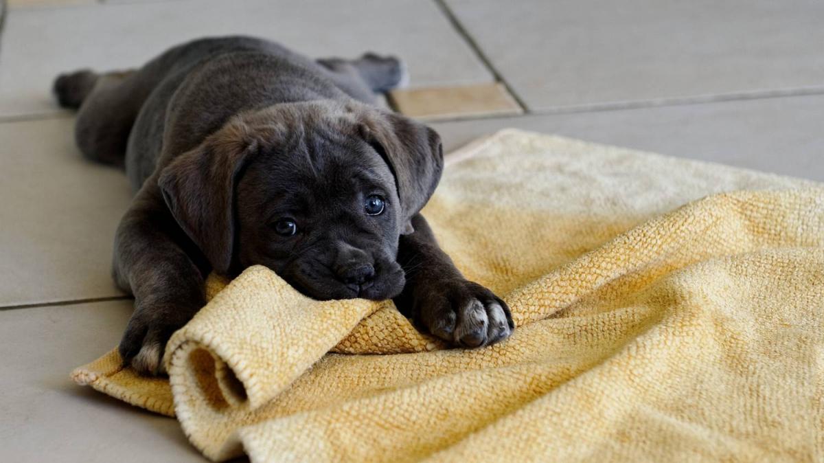 как приучить щенка +к туалету