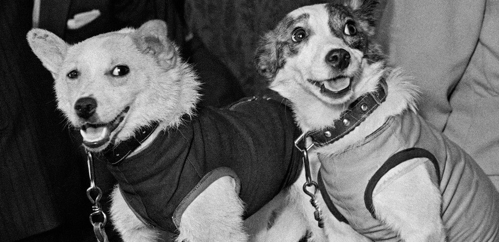 факты о знаменитых собаках
