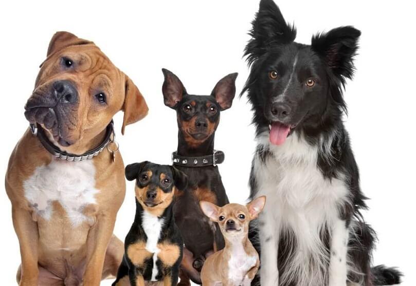 содержание и уход за собакой