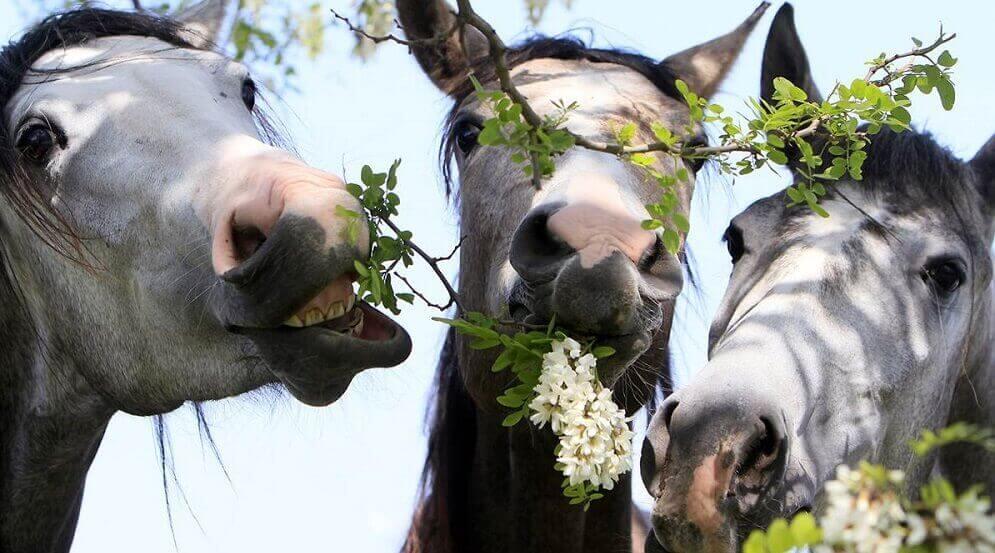 трава для лошади