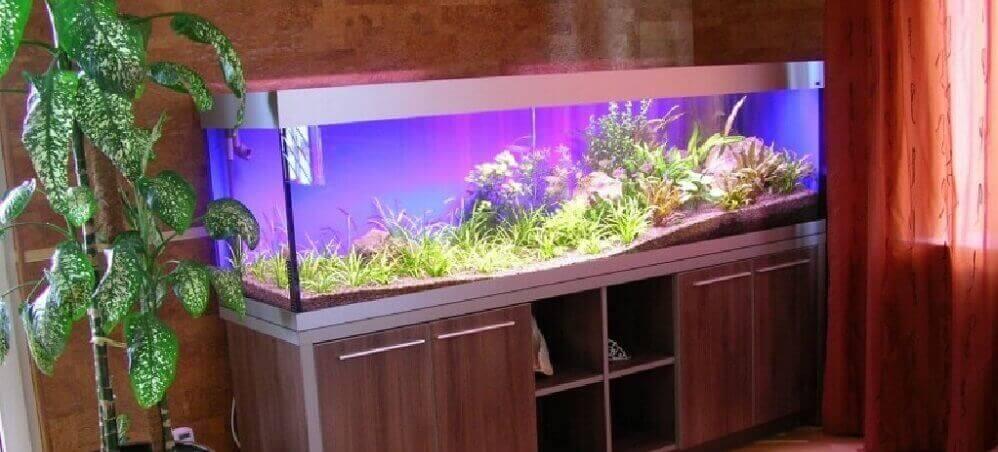 Содержание аквариумных рыбок в домашних условиях