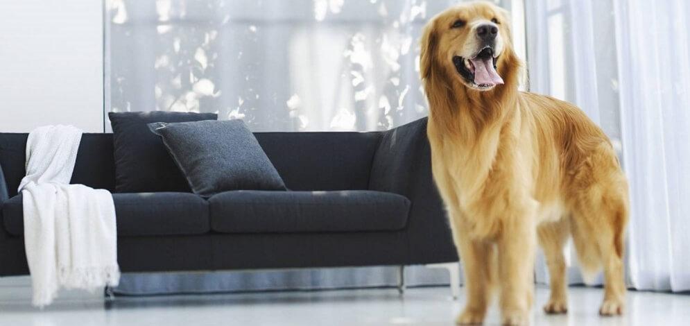 уход за длинношерстной собакой