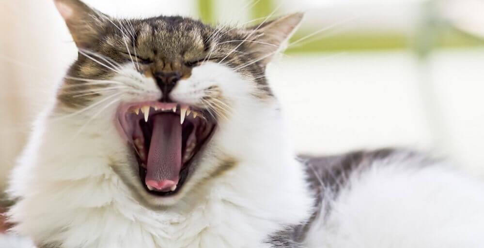 профилактика болезней кошек