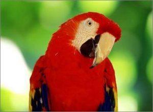 Крупные попугаи породы фото