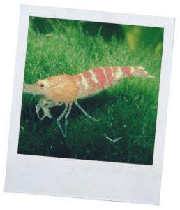аквариумные обитатели