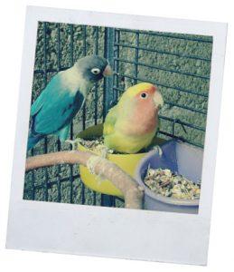 Рубрика о кормлении попугаев