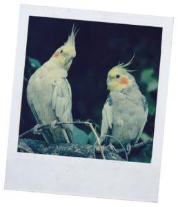 Интересное о попугаях