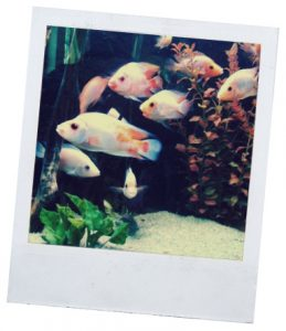 как кормить рыбок