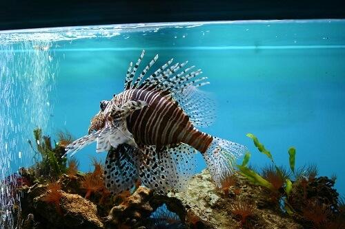 как подготовить аквариум к запуску рыб