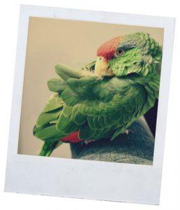 Рубрика о болезнях и лечении попугаев
