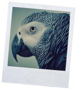 Рубрика о видах и породах попугаев