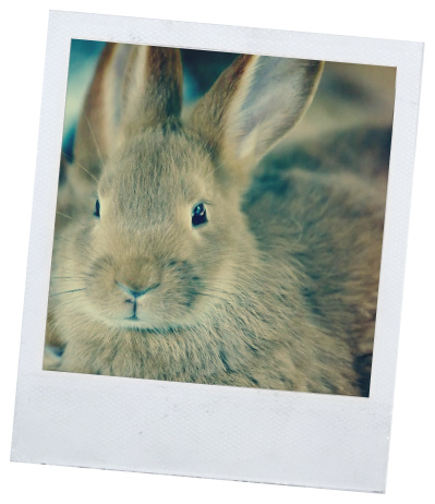 про кроликов
