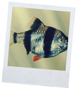 сайт о рыбках
