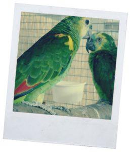 Рубрика об уходе за попугаями