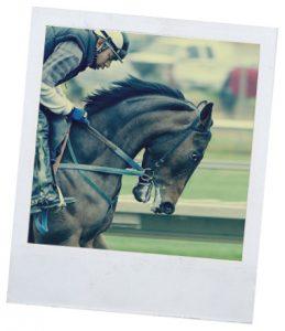 виды езды на лошади