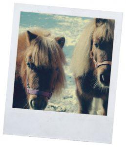 виды коней