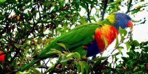 Виды попугаев, фото