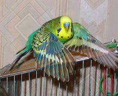 Скачать программу разговорный жанр для попугая