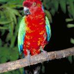 Блестящие попугаи - боятся людей