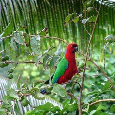 Блестящие попугаи - содержание