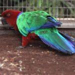 Блестящие попугаи - уход