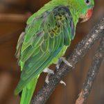 Большеклювые попугаи - тропический вид