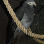 Попугай жако - игривый вид