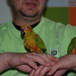 Попугай аратинга - уход