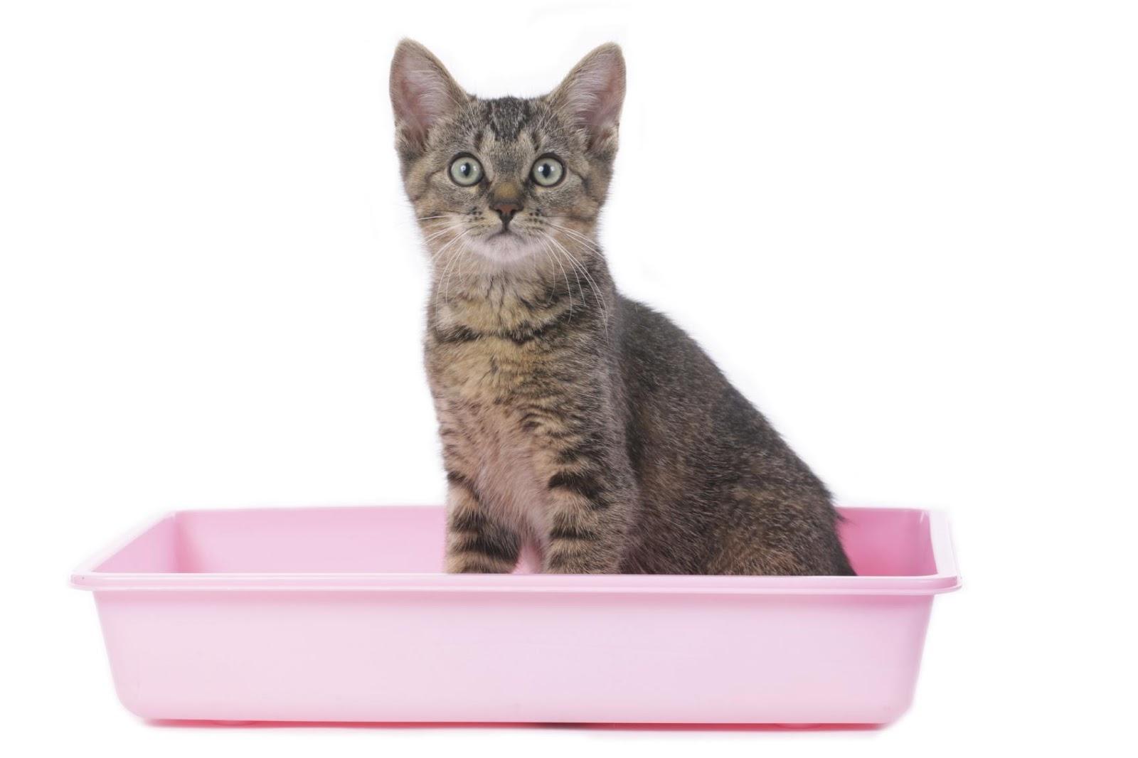 Как подобрать лоток кошке