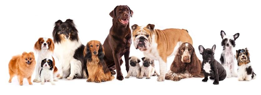 1Содержание собак в домашних условиях