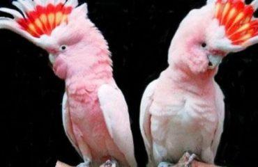 факты о попугаях