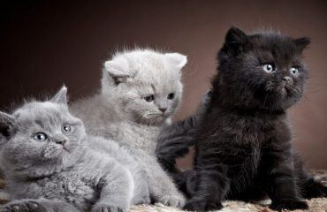 кошки виды породы