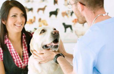 собака и ветеринар