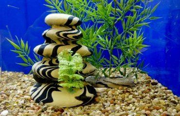 Подготовка аквариума к запуску рыб