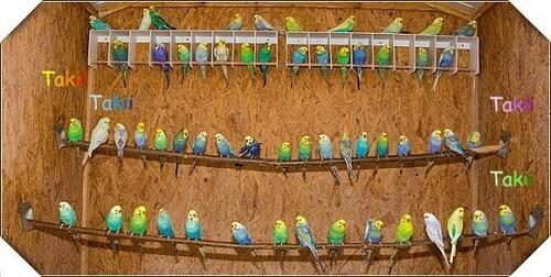 Все о попугаях волнистых лечение корм содержание