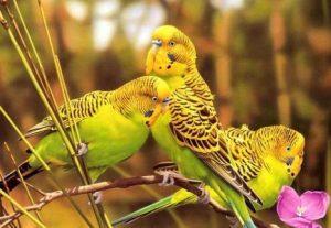 что едят попугаи в природе